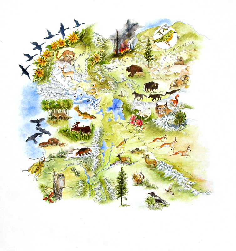 A Map Of The World According To Illustrators And Storytellers.The Artists Field Guide To Yellowstone The Artists Field Guide To